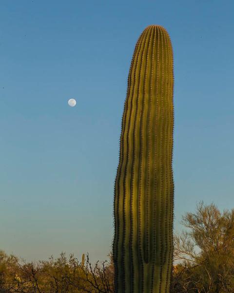 Sonoran Desert 2013