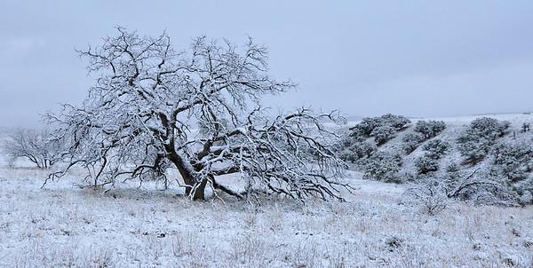 Skeleton Snow