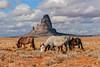 Navajo Land - Monument Valley - Arizona