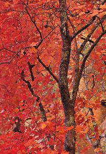 Redness West Fork of Oak Creek