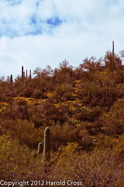 A landscape taken Feb. 19, 2012 near Globe, AZ.