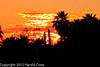 A landscape taken Feb. 15, 2012 in Tucson, AZ.