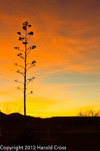 A landscape taken Feb. 23, 2012 near Benson, AZ.