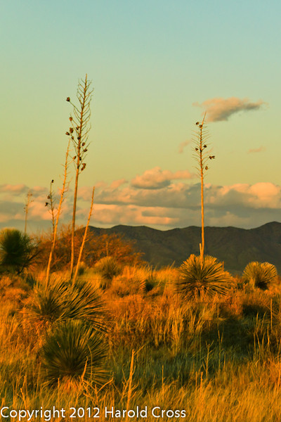 A landscape taken Feb. 19, 2012 near Wilcox, AZ.