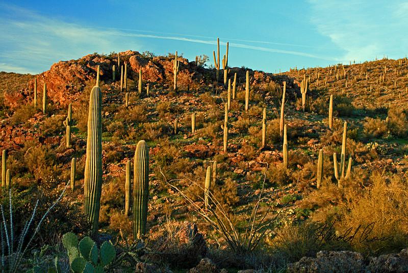 A landscape taken Feb, 8, 2010 near Apache Junction, AZ.