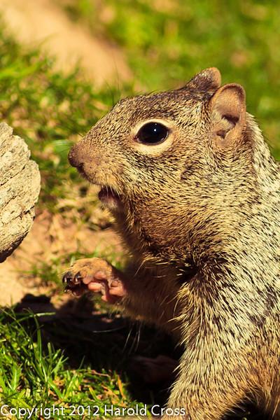 A Squirrel taken Feb. 25, 2012 in Tucson, AZ.