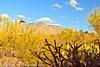 A landscape taken Feb. 13, 2012 in Tucson, AZ.
