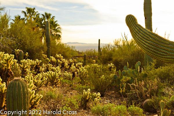 A landscape taken Feb. 3, 2012 near Tuscon, AZ.