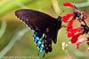 A butterfly taken Feb. 13, 2012 in Tucson, AZ.