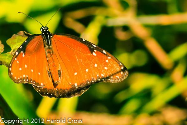 A butterfly taken Feb. 9, 2012 in Tucson, AZ.