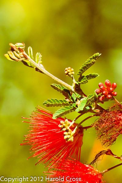 A Wildflower taken Feb. 25, 2012 in Tucson, AZ.