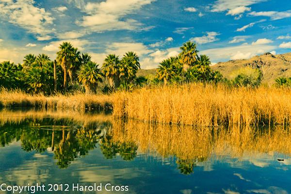 A landscape taken Feb. 6, 2012 in Tucson, AZ.