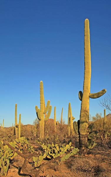 Taken Feb 15, 2010 near Tuscon, AZ.