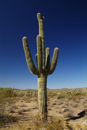 Arizona Landscapes