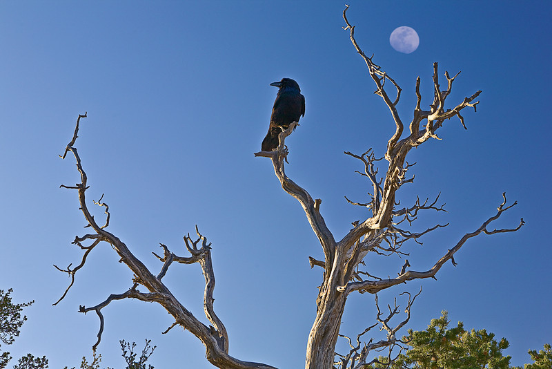 Arizona, Grand Canyon National Park Landscape 亚利桑那 大峡谷 风景