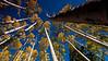 Lockett Meadow Flagstaff Arizona