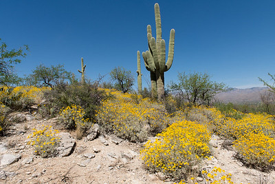 East Saguaro National Park.