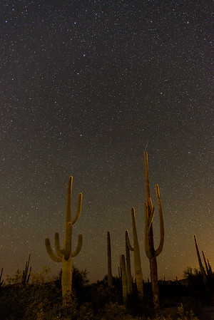 Organ Pipe National Monument is known for its lack of light pollution. Here, however, we were near a highway and the cacti were rim lit by the headlights of a passing car.