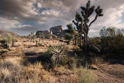 1DX20551Joshua Tree Nat park