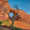 Icononic tree and arch in Monument Valley