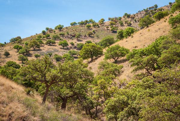 Tree Covered Hill at Coronado National Memorial