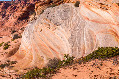 Waves of Sandstone, Petrified