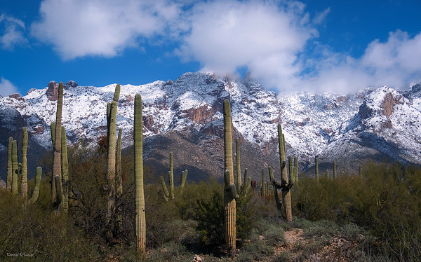 A Typical Sonoran Desert Day