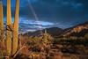 Sonoran Rainbow
