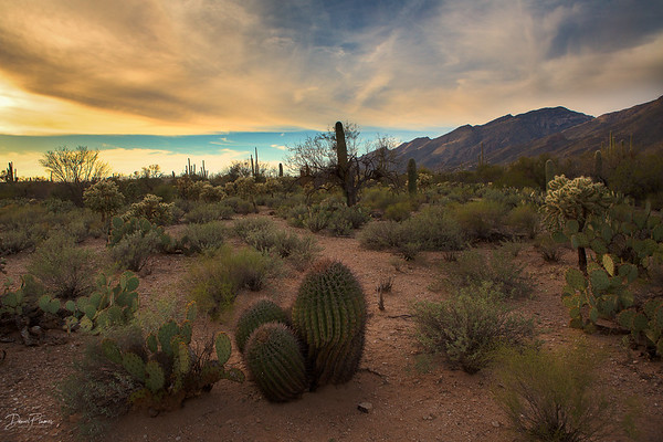Sonoran Golden Hour