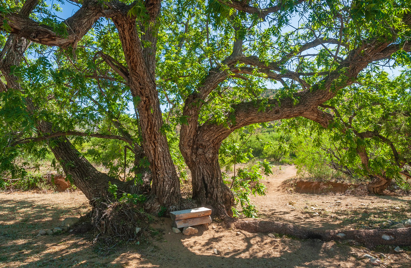 Bench Under Tree at Fort Bowie National Historic Site