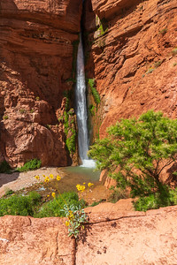 Deer Creek Waterfall and Wildflowers