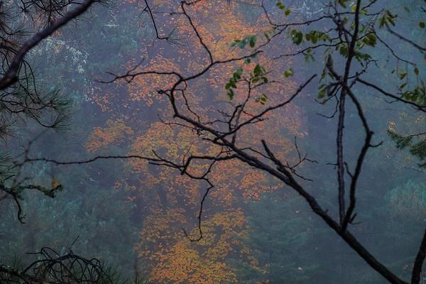 Framed In Evergreen