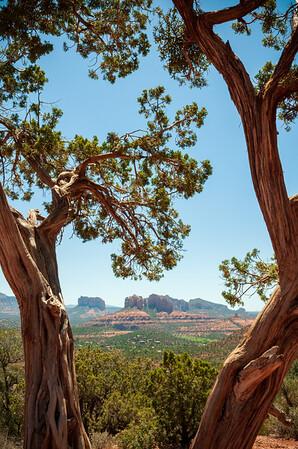 View through the trees of the Beautiful Landscape of Sedona, Arizona