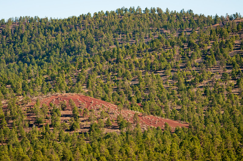 Red Earth and Forest at Sunset Crater National Monument