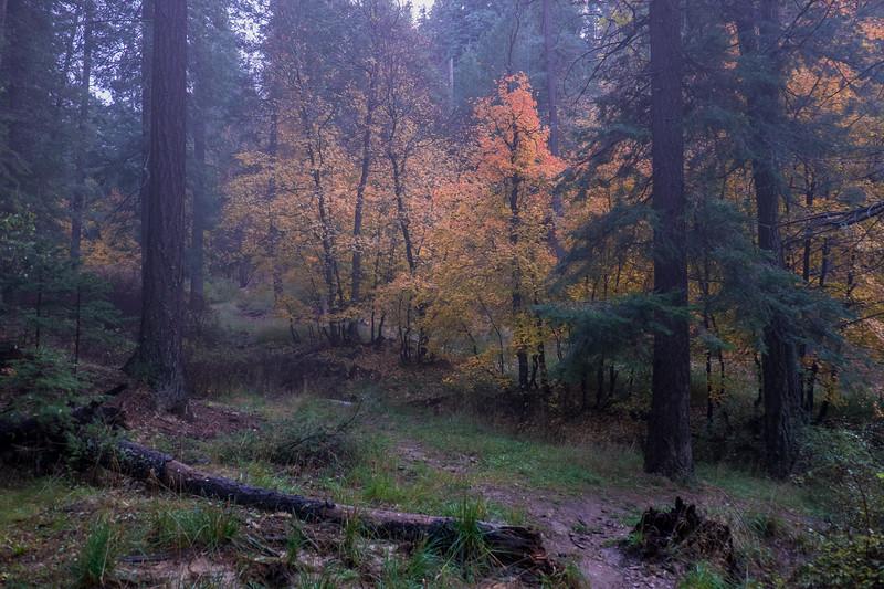 Foggy Mountain Color