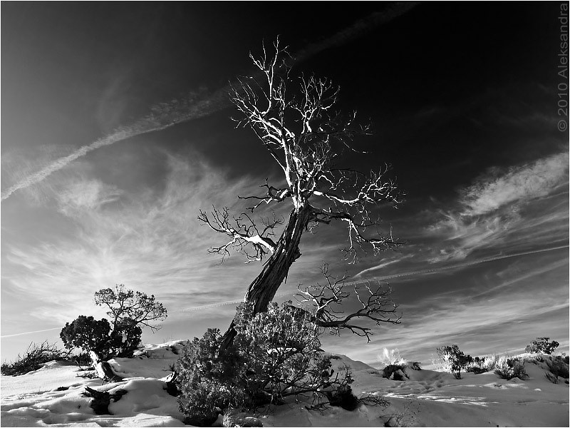 Winter tree, b&w