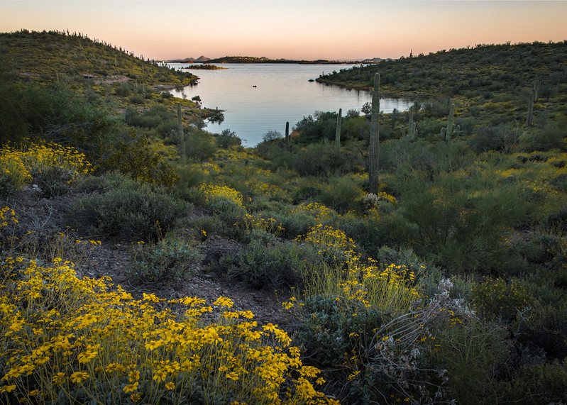 Lake Wildflowers
