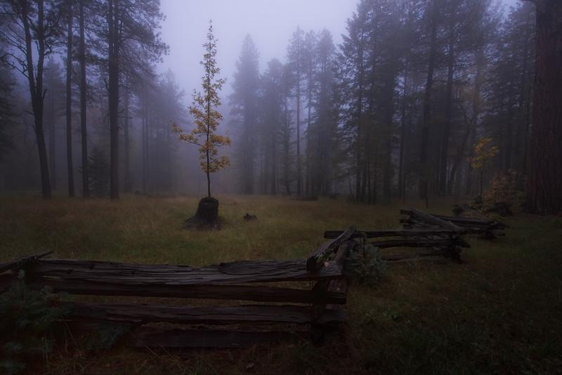Foggy evening on the Mogollon Rim - Rim Road