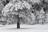 Mingus Snow II