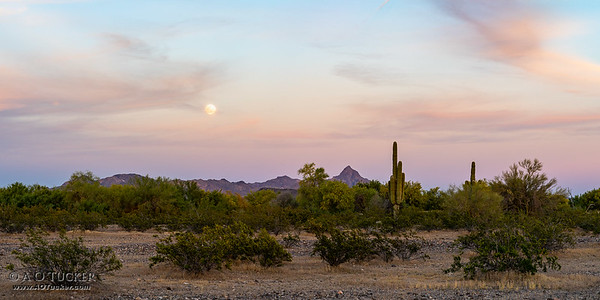 Full Flower Moon During Desert Sunset