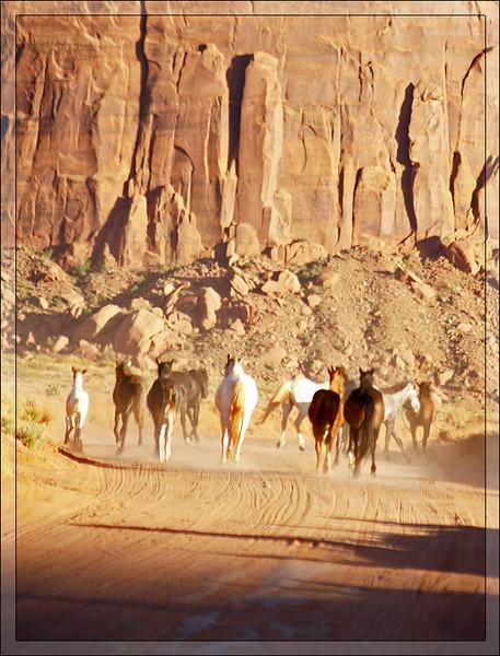 Navajo horses