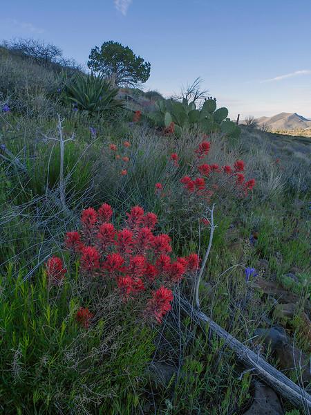 Seven Springs Rd, AZ