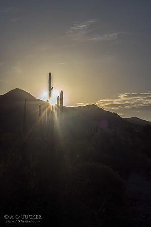Desert Morning Star