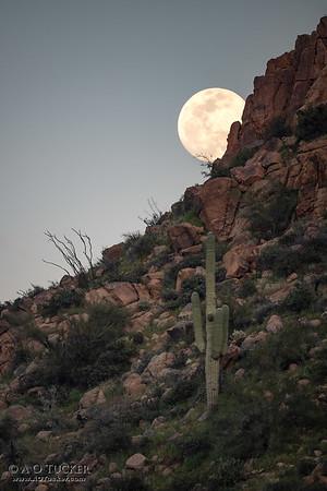 Super Worm Moon Rising