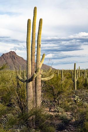 Tres Saguaros Mountain Park