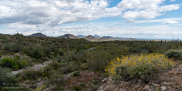 Harquahala Mountain Vista