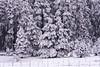 Mingus Snow I