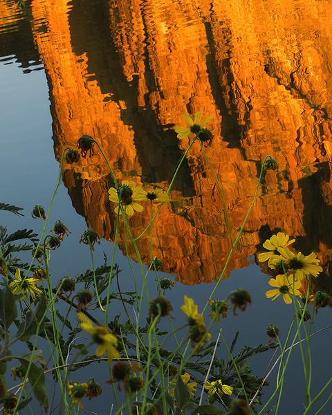 Bulldog Cliffs reflection, Salt River, Mesa