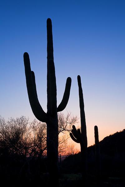 Arizona, Saguaro National Park, Sunset Landscape, 亚利桑那,  仙人掌国家公园 沙漠, 风景