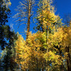 Fall trees at top of My Lemmon